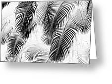 Black And White Palm Fronds Greeting Card by Karon Melillo DeVega