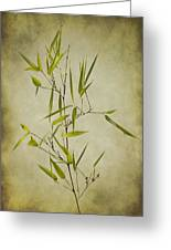 Black Bamboo Stem. Greeting Card by Clare Bambers