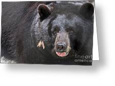 Black Bear Greeting Card by Meg Rousher
