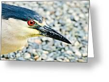 Black Crowned Night Heron 2 Greeting Card by Bob and Nadine Johnston