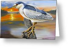 Black Crowned Night Heron At The Jordan Greeting Card by Phyllis Beiser