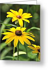 Black Eyed Susan Greeting Card by Marty Koch