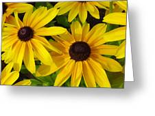 Black Eyed Susans Greeting Card by Suzanne Gaff