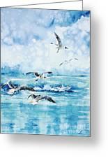 Black-headed Seagulls At Seven Seas Beach Greeting Card by Zaira Dzhaubaeva