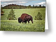 Black Hills Bull Bison Greeting Card by Robert Frederick
