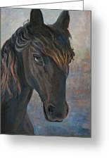 Black Horse Greeting Card by Marco Busoni