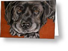 Black Labrador Rests Head Rescue Dog Greeting Card by Amy Reges