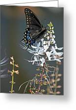Black Swallowtail Among The Cats Whiskers Greeting Card by Suzanne Gaff