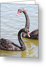 Black Swan Pair Greeting Card by Carol Groenen