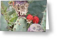 Blackberries Are Coming Greeting Card by Lorri Crossno