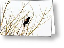Blackbird Singing A Happy Tune Greeting Card by Tina M Wenger