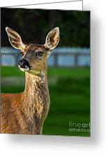Blacktail Portrait Greeting Card by Robert Bales
