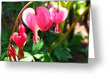 Bleeding Heart Greeting Card by Brittany H