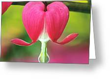 Bleeding Heart Greeting Card by Rona Black