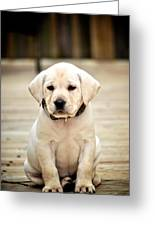 Blond Lab Pup Greeting Card by Kristina Deane