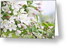 Blooming Apple Tree Greeting Card by Elena Elisseeva
