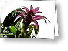 Blooming Bromeliad Greeting Card by Christi Kraft