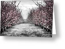 Blooming peach orchard Greeting Card by Elena Elisseeva