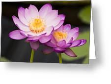 Blooming Violet  Greeting Card by Naushad  Waheed