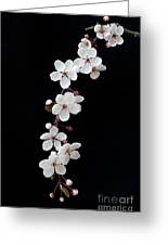 Blossom On Black Greeting Card by Tim Gainey