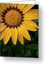 Blossom Greeting Card by Ron White