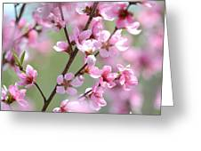Blossoming Hillside Greeting Card by Melanie Moraga