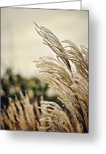 Blowing In The Wind Greeting Card by Heather Applegate