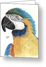 Blue And Gold Macaw Greeting Card by Heather Gessell