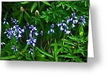 Blue Bells Greeting Card by Aimee L Maher Photography and Art