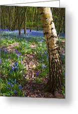 Blue Bells Path Greeting Card by Svetlana Sewell