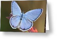 Blue Butterfly Square Greeting Card by Carol Groenen