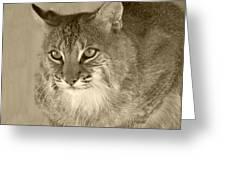 Blue Eyed Bobcat-sepia Greeting Card by Jennifer  King