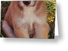 blue eyed pup Greeting Card by Dennis Nadeau