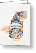 Blue Fish   Greeting Card by Pat Saunders-White