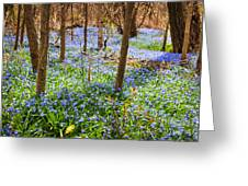 Blue Flowers In Spring Forest Greeting Card by Elena Elisseeva