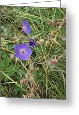 Blue Flowers Greeting Card by John Williams