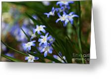 Blue For You Greeting Card by Neal  Eslinger