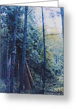 Blue Forest By Jrr Greeting Card by First Star Art
