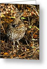 Blue Grouse Greeting Card by Robert Bales
