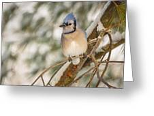 Blue Jay Greeting Card by Everet Regal
