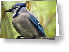 Blue Jay On A Misty Spring Day - Square Format Greeting Card by Lois Bryan