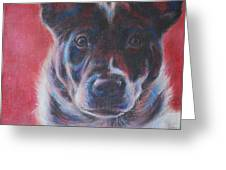 Blue Merle On Red Greeting Card by Kimberly Santini