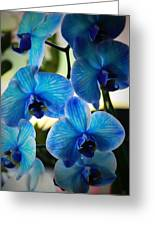Blue Monday Greeting Card by Mandy Shupp