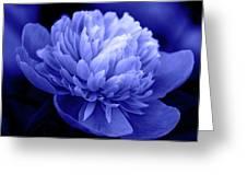 Blue Peony Greeting Card by Sandy Keeton