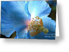 Blue Poppy Greeting Card by Carol Groenen