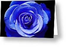 Blue Rose Greeting Card by Aimee L Maher Photography and Art
