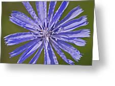 Blue Star... Greeting Card by Nina Stavlund