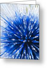 Blue Starburst Greeting Card by Caroline Roberti