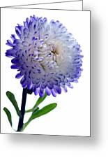 Blue Tipped Aster Greeting Card by Terence Davis