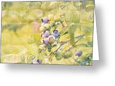 Blueberries Painted on the Wall Greeting Card by Alanna DPhoto